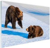 Bruine beren in de sneeuw Glas 60x40 cm - Foto print op Glas (Plexiglas wanddecoratie)
