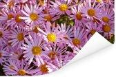 Aster bloemen in een tuin Poster 180x120 cm - Foto print op Poster (wanddecoratie woonkamer / slaapkamer) XXL / Groot formaat!