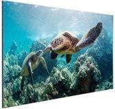 Twee zeeschildpadden Aluminium 120x80 cm - Foto print op Aluminium (metaal wanddecoratie)