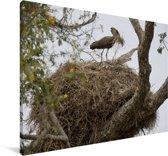 Een hamerkop bij zijn nest Canvas 60x40 cm - Foto print op Canvas schilderij (Wanddecoratie woonkamer / slaapkamer)
