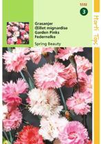 Hortitops Zaden - Grasanjer (Dianthus plumaris)