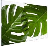 Twee bladeren botanische print Aluminium 90x60 cm - Foto print op Aluminium (metaal wanddecoratie)