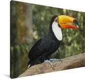 Een toekan met voedsel in zijn bek op een stuk hout Canvas 140x90 cm - Foto print op Canvas schilderij (Wanddecoratie woonkamer / slaapkamer)