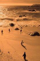 Alive! little penguin friends - Orange duotone - Photo Art Notebooks (6 x 9 series)
