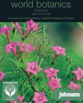 Ipomoea quamoclit Rose - set van 5 stuks