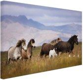Paarden in de bergen Canvas 30x20 cm - Foto print op Canvas schilderij (Wanddecoratie)