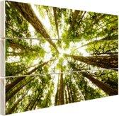 FotoCadeau.nl - Hoge groene bomen in jungle Hout 80x60 cm - Foto print op Hout (Wanddecoratie)