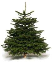 Echte kerstboom Nordmann Kerstboom - 105-130 cm