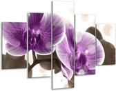 Glasschilderij Orchidee | Paars, Wit | 100x70cm 5Luik | Foto print op Glas |  F005079