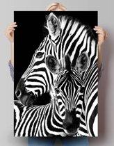 Zebra    - Poster 61 x 91.5 cm