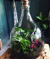 Ecosysteem in fles
