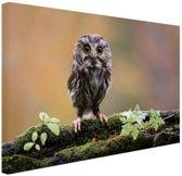 FotoCadeau.nl - Kleine uil Canvas 80x60 cm - Foto print op Canvas schilderij (Wanddecoratie)