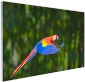 Vliegende ara  Glas 120x80 cm - Foto print op Glas (Plexiglas wanddecoratie)