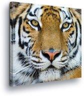 Tiger Canvas Print 80cm x 80cm