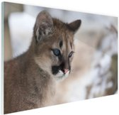 Poema welp Glas 90x60 cm - Foto print op Glas (Plexiglas wanddecoratie)