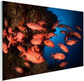 Oranje vissen in koraalrif Glas 90x60 cm - Foto print op Glas (Plexiglas wanddecoratie)