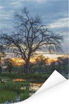 Moeras en bomen in het Nationaal park Chobe Poster 80x120 cm - Foto print op Poster (wanddecoratie woonkamer / slaapkamer)