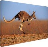 Actiefoto van kangoeroe Canvas 60x40 cm - Foto print op Canvas schilderij (Wanddecoratie)