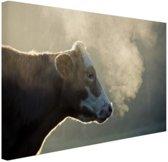 Koe bij zonsopgang Canvas 120x80 cm - Foto print op Canvas schilderij (Wanddecoratie)