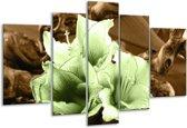 Glasschilderij Bloem | Groen, Bruin | 170x100cm 5Luik | Foto print op Glas |  F004557