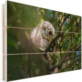 Bosuil tussen de takken in de boom Vurenhout met planken 90x60 cm - Foto print op Hout (Wanddecoratie)