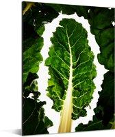 Donkergroene snijbieten tegen een witte achtergrond Aluminium 30x40 cm - klein - Foto print op Aluminium (metaal wanddecoratie)