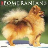 Pomeranian Kalender 2020
