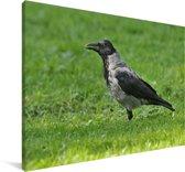 Bonte kraai staat in het gras Canvas 90x60 cm - Foto print op Canvas schilderij (Wanddecoratie woonkamer / slaapkamer)