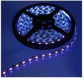 4 Meter UV Ultraviolet 12V Led Strip 60LED IP20 SMD5050