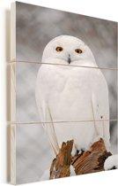Portretfoto van een sneeuwuil Vurenhout met planken 60x90 cm - Foto print op Hout (Wanddecoratie)