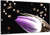 Glasschilderij Tulp | Paars, Zwart | 120x70cm 1Luik | Foto print op Glas |  F004972