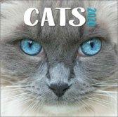 Kalender 2020 Cats (30.5 x 30.5)