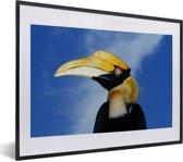Foto in lijst - Wilde dubbelhoornige neushoornvogel met een blauwe achtergrond fotolijst zwart met witte passe-partout klein 40x30 cm - Poster in lijst (Wanddecoratie woonkamer / slaapkamer)