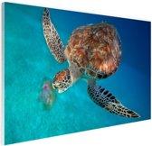 Groene schildpad met kwal Glas 90x60 cm - Foto print op Glas (Plexiglas wanddecoratie)