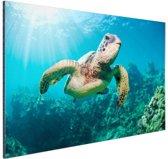 Zwemmende schildpad fotoafdruk Aluminium 90x60 cm - Foto print op Aluminium (metaal wanddecoratie)