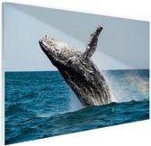 Springende walvis met regenboog Glas 90x60 cm - Foto print op Glas (Plexiglas wanddecoratie)