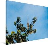 Purperreiger hoog in een boom Canvas 180x120 cm - Foto print op Canvas schilderij (Wanddecoratie woonkamer / slaapkamer) XXL / Groot formaat!