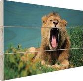 Gapende leeuw Hout 120x80 cm - Foto print op Hout (Wanddecoratie)