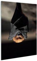 Hangende vleermuis Glas 20x30 cm - klein - Foto print op Glas (Plexiglas wanddecoratie)