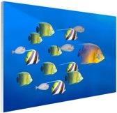 Grote vis leider van tropische vissen Glas 90x60 cm - Foto print op Glas (Plexiglas wanddecoratie)