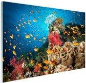 Koraal met vissen Glas 180x120 cm - Foto print op Glas (Plexiglas wanddecoratie) XXL / Groot formaat!