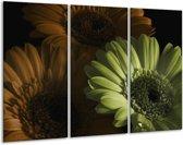 Glasschilderij Bloem | Bruin, Groen | 120x80cm 3Luik | Foto print op Glas |  F002526