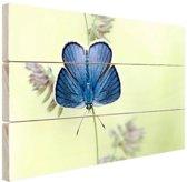 Blauwe vlinder Hout 80x60 cm - Foto print op Hout (Wanddecoratie)