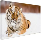 FotoCadeau.nl - Amur tijger in de sneeuw Canvas 120x80 cm - Foto print op Canvas schilderij (Wanddecoratie)