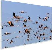 Een grote groep rode flamingos vliegen door de lucht Plexiglas 90x60 cm - Foto print op Glas (Plexiglas wanddecoratie)