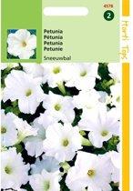 Petunia Sneeuwbal - Petunia nana compacta - set van 10 stuks
