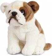 Knuffel Engelse Bulldog