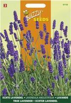 Buzzy zaden - Lavendel - Lavandula angustifolia