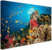 Koraal met vissen Canvas 120x80 cm - Foto print op Canvas schilderij (Wanddecoratie woonkamer / slaapkamer)