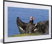 Foto in lijst - Een Californische condor aan de rand van de Stille Oceaan fotolijst zwart met witte passe-partout 60x40 cm - Poster in lijst (Wanddecoratie woonkamer / slaapkamer)